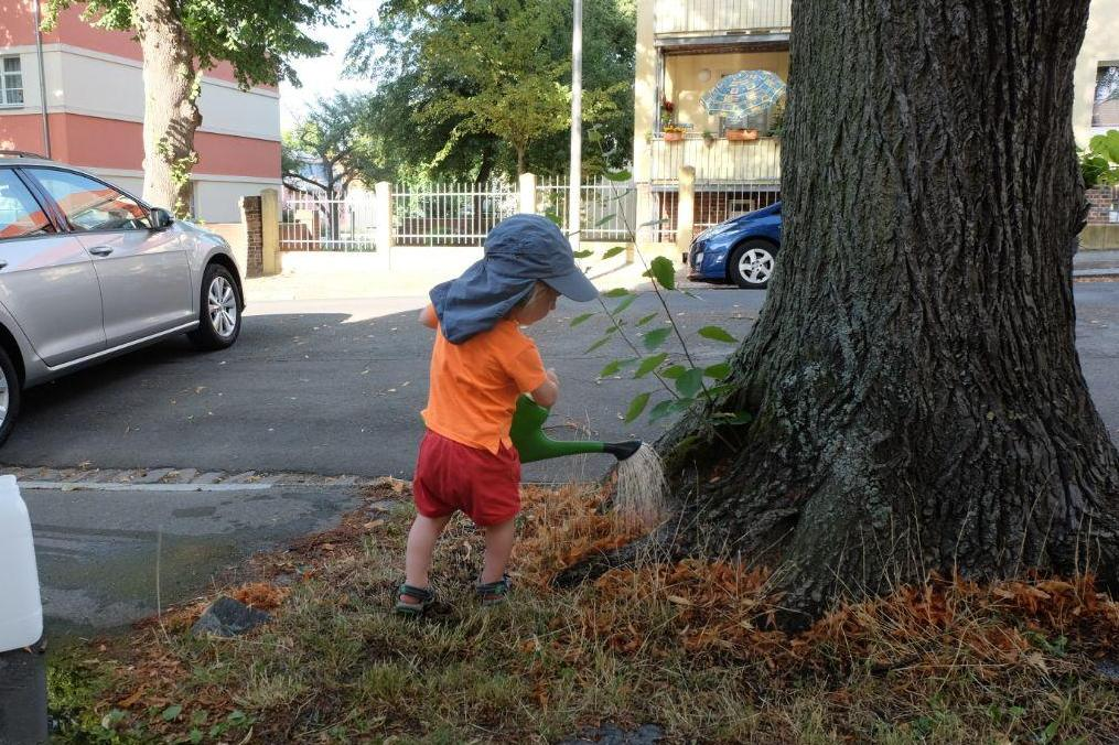 Straßenbäume retten – wo anfangen?